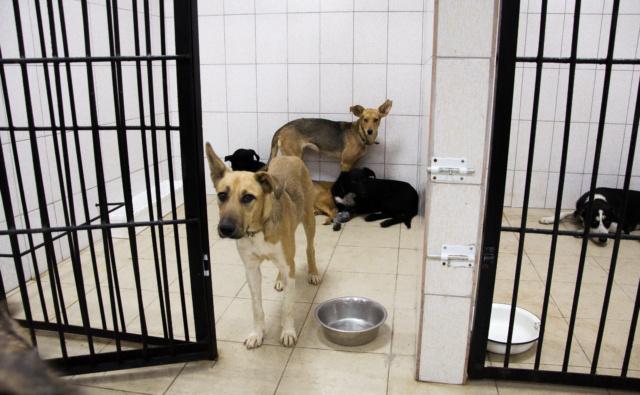 Thumbnail for - Целевой сбор средств на стерилизацию бездомных собак!